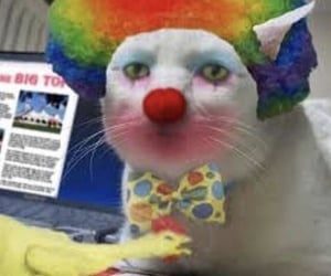 clown and reaction pic image