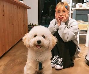 mamamoo, wheein, and dog image