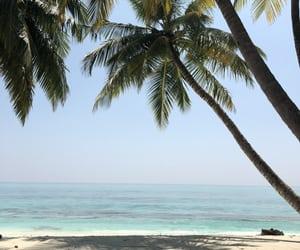 Maldives, nature, and palmatree image