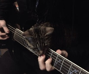 cat, guitar, and ricky horror image