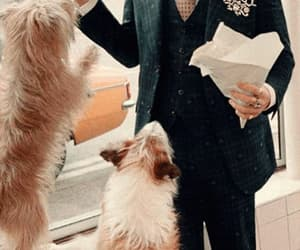 Harry Styles, dog, and gucci image