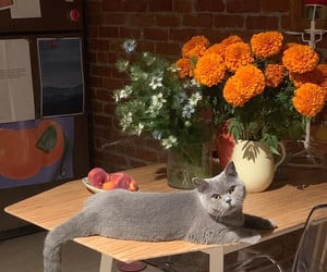animals, cats, and flowers image