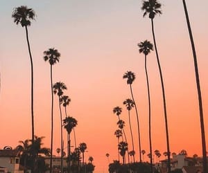 palm trees, orange, and sky image