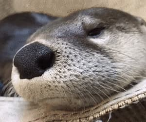 gif and otter pup image