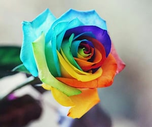 beautiful, flower, and rainbow image