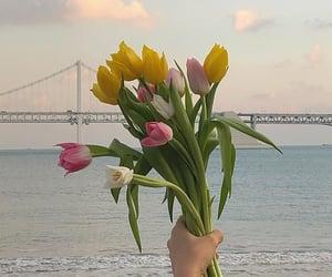 flowers, soft, and bridge image