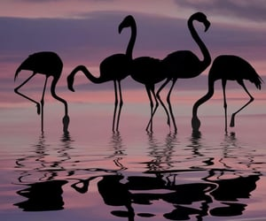 aesthetic, flamingo, and sky image