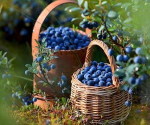 basket, blueberries, and photography image
