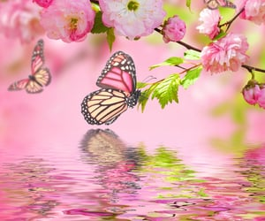 beautiful, butterfly, and wallpaper image