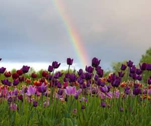 floral, flowers, and landscape image