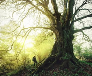 autumn, fog, and photography image