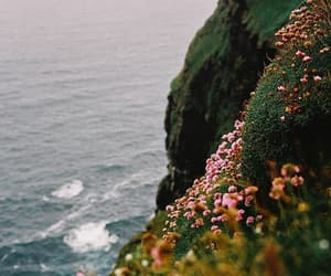 flowers, photography, and sea image