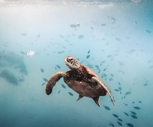 animal, turtle, and ocean image