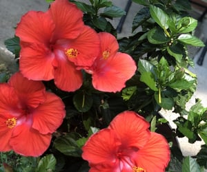 beautiful, good morning, and hibiscus image
