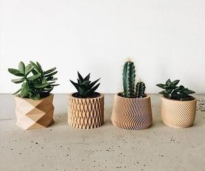 cactus, minimalist, and plants image
