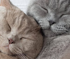 animals, beauty, and cat image