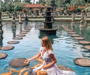 beautiful, travel, and fish image