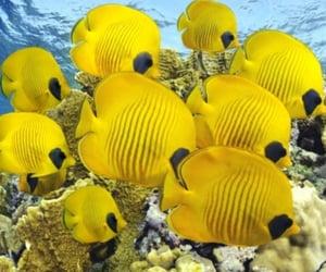 fish and yellow image