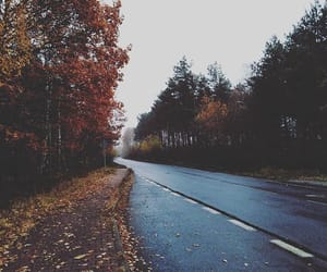 autumn, beautiful, and colors image