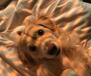dog, animal, and cute image