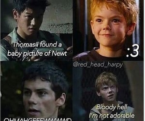 newt, thomas, and thomas brodie-sangster image