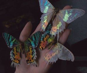 butterfly, nature, and colors image