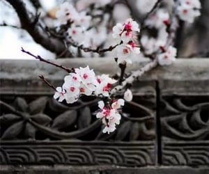 blossom, china, and flower image
