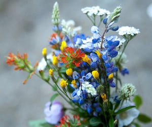 flowers, beauty, and colorful image