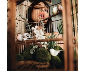 alternative, bird cage, and birds image