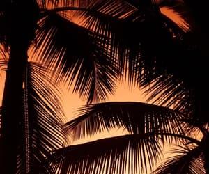beach, orange, and palms image