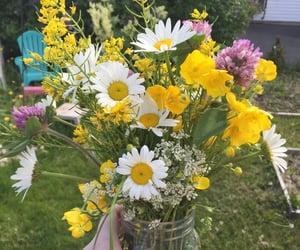 garden, spring, and summer image