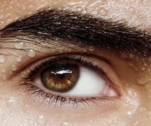 brown eyes and eyebrows image