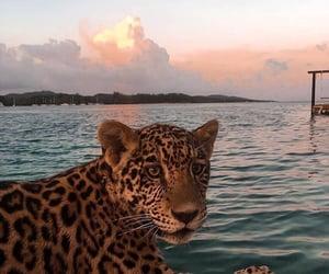 animal, sea, and leopard image