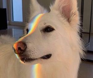dog, rainbow, and animal image