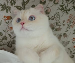 animals, cats, and white cat image