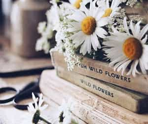 book, daisy, and flowers image