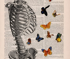 art, skeleton, and butterfly image