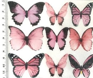 butterfly, pink, and theme image