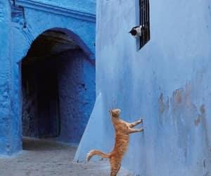 cat, kitten, and romantic image