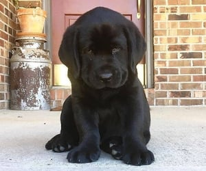 animals, lifestyle, and puppies image
