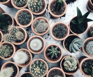 cactus, aesthetic, and green image
