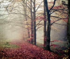 nature, tree, and autumn image