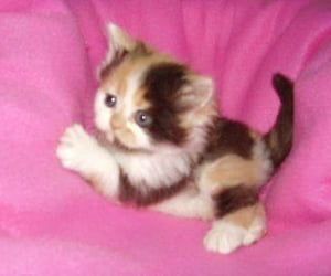 kitten, pink, and soft image