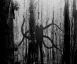 dark, horror, and woods image
