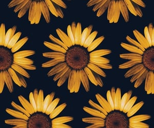 background, black, and sunflower image