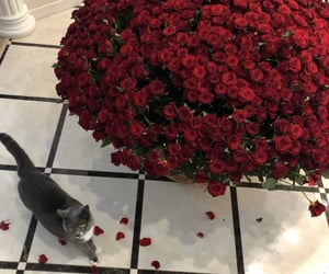 cat, flowers, and glamour image