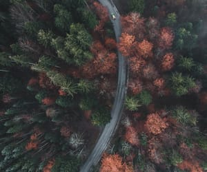 autumn, forest, and germany image