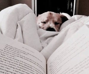 book, puppy, and bookworm image