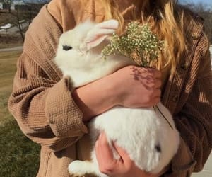aesthetic, animals, and bunny image