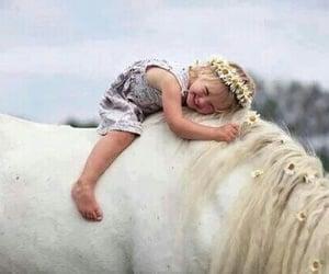 animals, white horse, and horse image